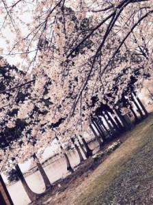鶴の舞橋03