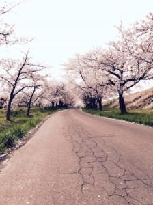 鶴の舞橋(桜トンネル)01